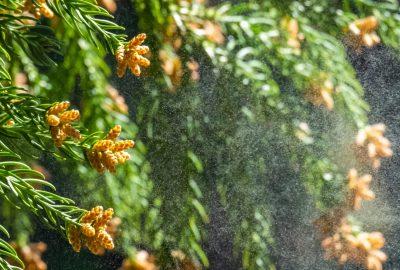 花粉飛散量3位の静岡県!対策していますか?