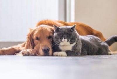 ペットの快適空間 〜ペットと熱中症〜